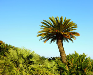 Nice palm tree in the blue sunny sky