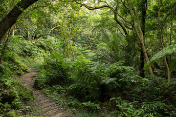 Path in a lush and verdant forest full of trees and plants