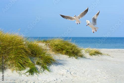 Fototapete Möwen am Sandstrand