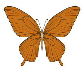beautiful vintage butterfly isolated on white background