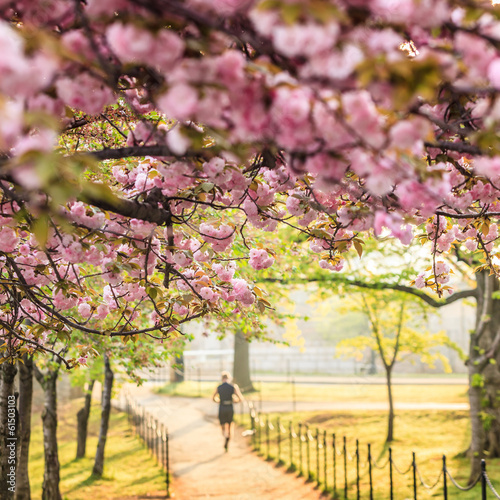 Wall mural Cherry Blossom Festival. Washington, DC