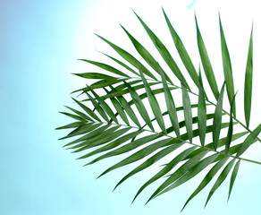 Beautiful palm leaves on blue background