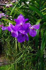 Coltivazione in serra di orchidee