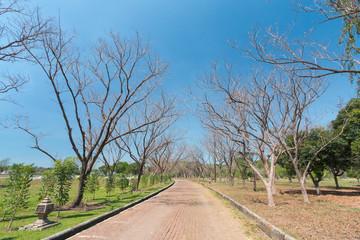 Dead tree road