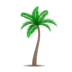 Tropical palm tree symbol