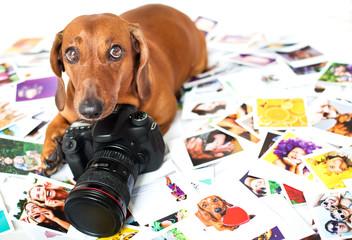 Cute dog among the photos