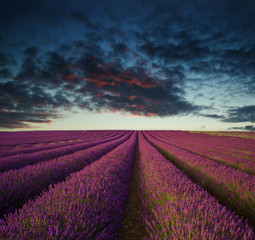 Deurstickers Crimson Vibrant Summer sunset over lavender field landscape