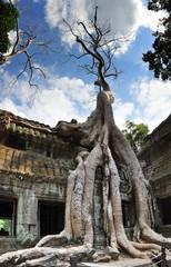 Strangler fig at Ta Prohm, Angkor / Cambodia