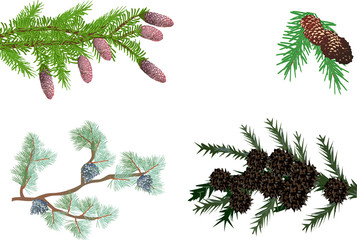 evergreen branches collection isolated on white