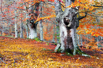 Wall Mural - Forest in autumn with vivid colors