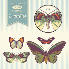 hand-drawn vintage butterfly illustrations