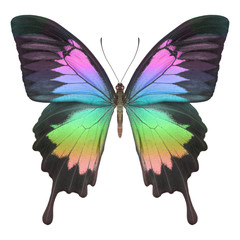 Schmetterling bunt