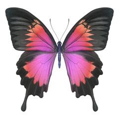 Schmetterling rot pink