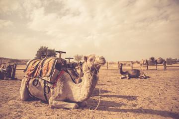 Camel - vintage look