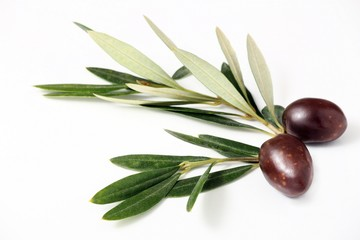 Wall Mural - Olive mature e foglie d'ulivo#2