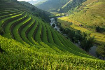 Fotobehang Rijstvelden Rice field at Mu Cang Chai, Yenbai province, Vietnam