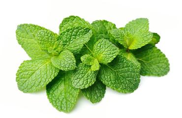 Fresh mint herbs