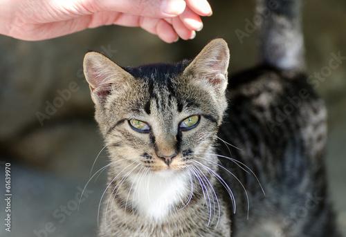 understanding cats