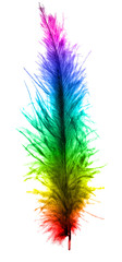 colorful feather - isolated on white