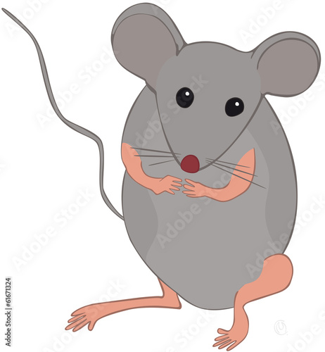 Petite Souris Grise Stock Image And Royalty Free Vector