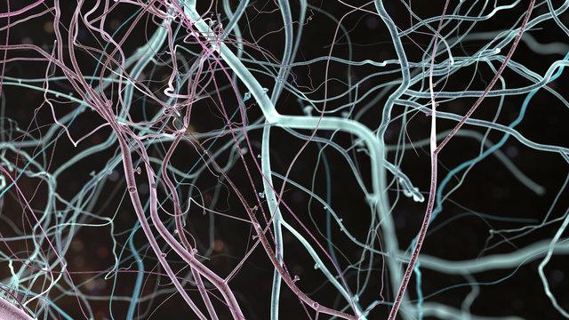 neuro structural