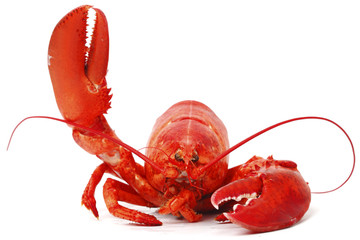 Deurstickers Schaaldieren Hello lobster