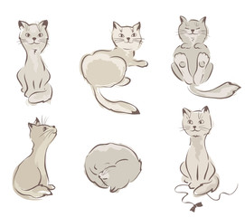Сollection of cats