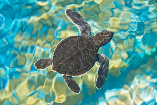 Top view of baby turtle