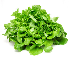 Green lettuce on a white background