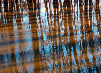 trees reflection on water
