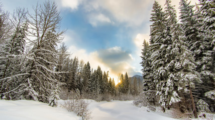 Fototapete - Sunrise behind a winter wonderland