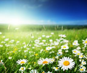 Foto op Aluminium Pistache field of daisy flowers