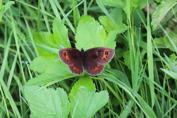 dark butterfly sitting on the leaf