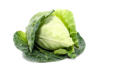 cabbage with green large leaves grows isolate on white backgroun