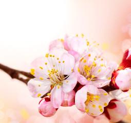 Fototapete - Spring Blossom. Apricot Flowers Border Art Design