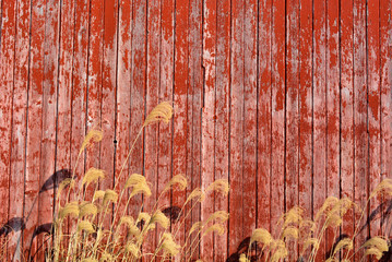 Barn Wood weathered and old Wall mural
