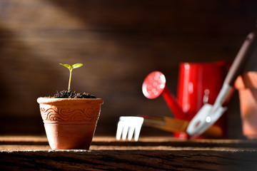 Young plant and gardening tools on old wooden background