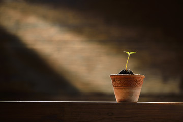 Young plant in the morning light on old wooden background Wall mural