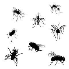 Vector collection of doodled flies and mosquitoes.