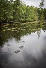 swamp - Louisiana