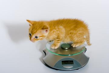 Gewichtskontrolle bei einem Katzenbaby