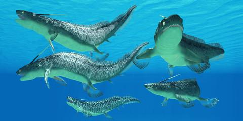 Devonian Xenacanthus Fish