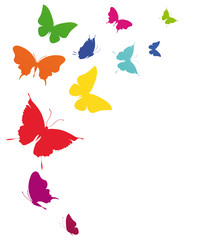 butterfly629