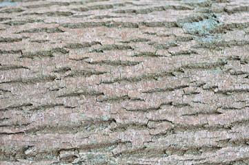 Ecorce sur tronc d'arbre pour texture
