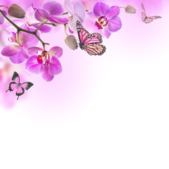 Fototapete - Floral background of tropical orchids and  butterfly