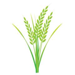 Rice on white background