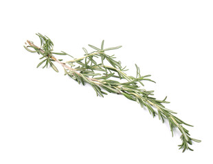 Twig of rosemary on a white.