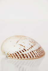 Sea shell, beautiful ocean life of Andaman, Thailand