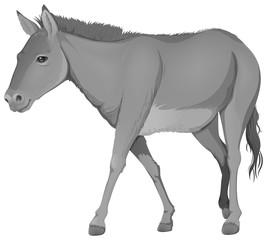 A grey donkey