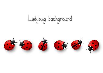 Fototapeta Ladybugs border obraz